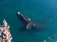 ballenas en patagonia