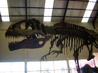 dinosaurios en la patagonia