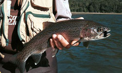 pesca 2017 patagonia