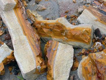 tronco-fosil