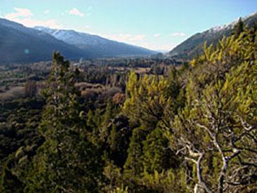 Bosque Andino Patagónico, Lago Puelo