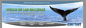 Vigilia de Ballenas en Madryn