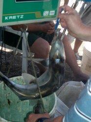 pesca playa union