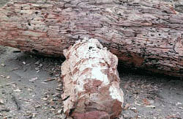 Bosque Petrificado Sarmiento