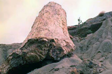 Bosuqe Petrificado Sarmiento