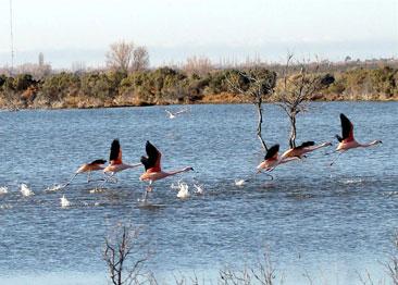lagunas del ornitologo, trelew