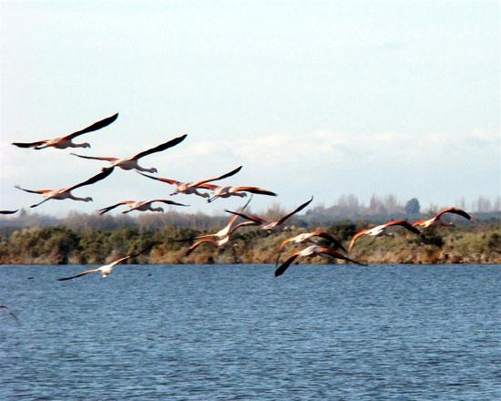 Lagunas Ornitólogo, Trelew