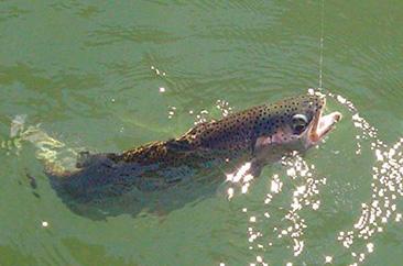 pesca en alumine