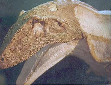 modelo-de-dinosaurio