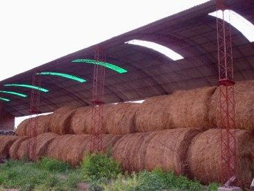 semila de alfalfa