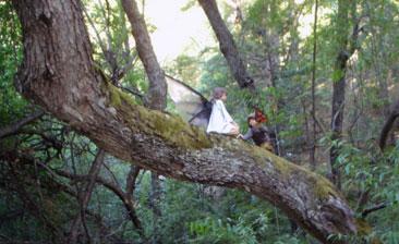belenus bosque bolson