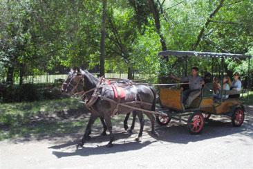 carruajes bolson