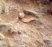 Fósiles San Julián