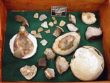 museo lamarque