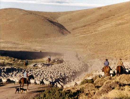 Arreo ovejas, Maquinchao