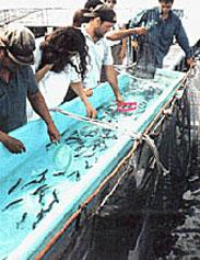 Acuicultura cultivar y cosechar peces en el agua san for Criadero de pescado tilapia