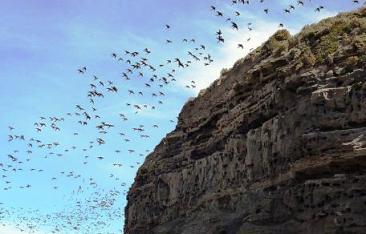 Observación de aves en El Cóndor.
