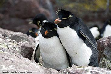 pinguino-conhijo