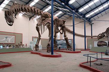 plaza huincul, argentinosaurus