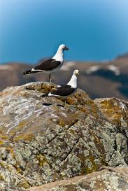 aves en Neuquén