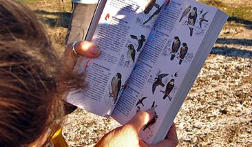 libro-de-aves